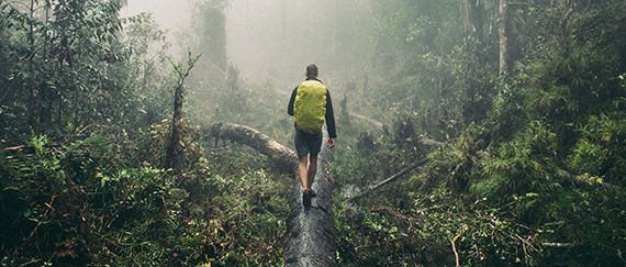 A man hikes in a misty rainforest with rented backpack with a raincover